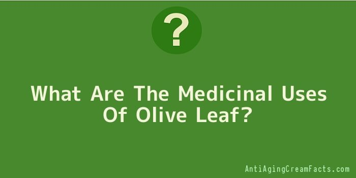 What Are The Medicinal Uses Of Olive Leaf